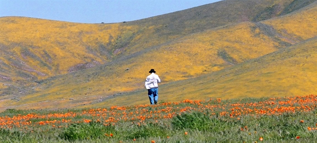 Image result for mount diablo wildflowers